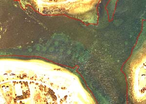 Mooring chain scars in outer West Falmouth Harbor in March 2005