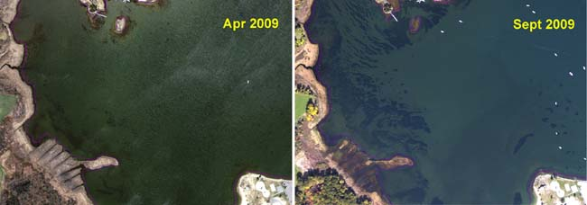 Seasonal vegetation shift in West Cove in 2009.