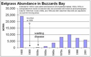 Historical Summary of eelgrass in Buzzards Bay from Costa 2003 State of Buzzards Bay presentation.