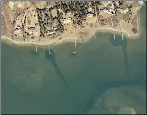photo of eelgrass channels