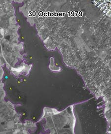 Apparent eelgrass cover in a 30 October 1979 aerial photograph.