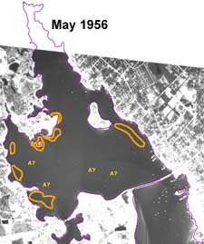 Eelgrass in Apponagansett Bay in May 1956 as estimated by the BBNEP.
