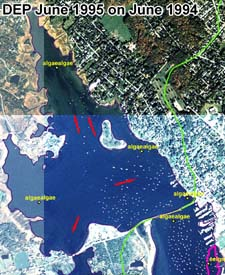 Absence of eelgrass DEP 1995 survey as illustrated on a June 1994 aerial photograph.