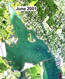 Absence of eelgrass DEP 2001 survey on original June 2001 source aerial photograph.