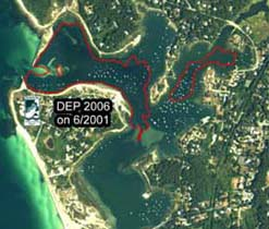 Eelgrass in West Falmouth Harbor, 7 June 2001
