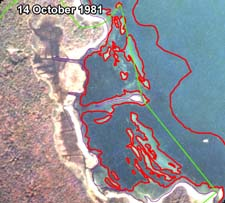 BBP estimate of eelgrass cover for 14 October 1981 image of East Cove West Island