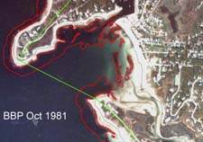 Eelgrass in Wild Harbor, 14 October 1981