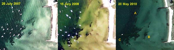 Variability in eelgrass cover in Wild Harbor, near the mouth of Wild River, 2007-2010.
