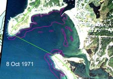 Eelgrass in Wild Harbor, 9 October 1971