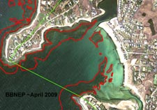 Eelgrass in Wild Harbor, BBNEP analysis of April 2009 aerial photograph.