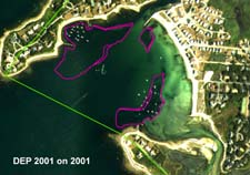 Eelgrass in Wild Harbor, DEP analysis of 2001 aerial photograph