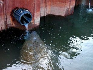 Photo of a Manatee in Rhode Island by Sgt. Francis Either, RI ENV POL
