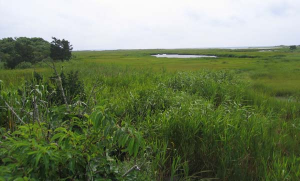 July 2006 Photograph of a Wareham Salt Marsh.