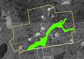 original wetlands delineation at Holly Woods