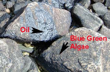 Image of both algae and oil on a rock